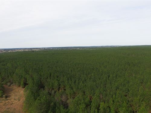 26 Ac N Timber Rd 14 : Woodville : Tyler County : Texas