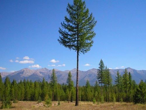Experience Quiet Montana : Condon : Missoula County : Montana