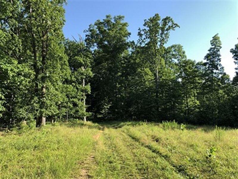 140+/- Acres Benton County Tn Land : Holladay : Benton County : Tennessee