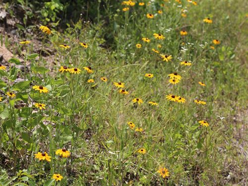 24 Acres Felix Currie Road : Point Blank : San Jacinto County : Texas