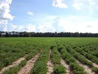 Beautiful South Georgia Farm : Climax : Decatur County : Georgia