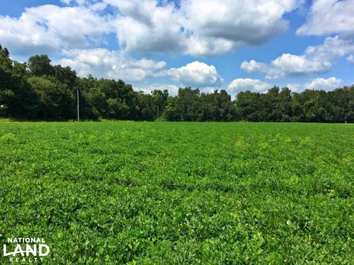 Baldwin County Mini Farm : Summerdale : Baldwin County : Alabama