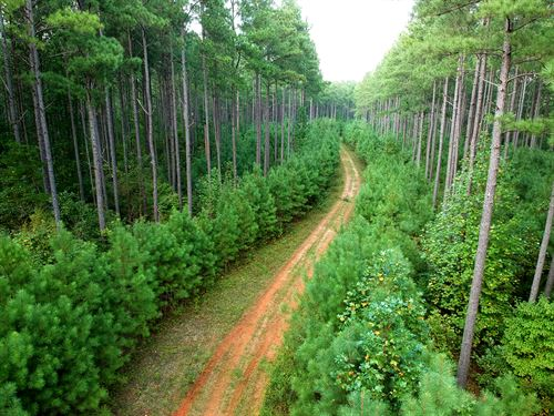 731 Acres Of Managed Timberland : Louisa : Virginia