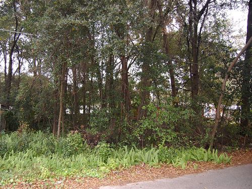 Beautiful Lot Near Lake Weir : Ocklawaha : Marion County : Florida