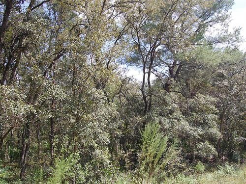 One Third Acre Near Keystone Height : Florahome : Putnam County : Florida
