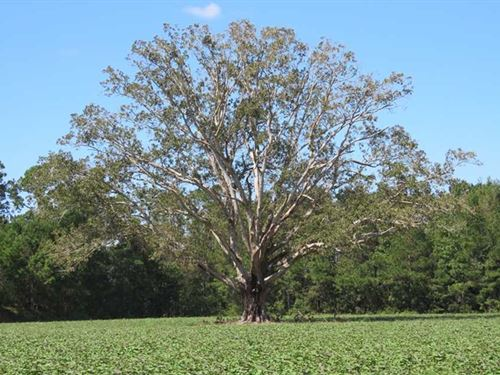 97 Acres of Farm And Timber Land : Chadbourn : Columbus County : North Carolina