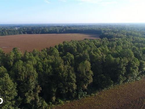 Bizzell Grove Church Road Farm : Selma : Johnston County : North Carolina