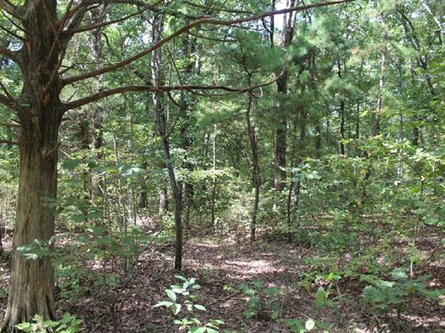 Building Lot 20 Minutes From : Mountain View : Stone County : Arkansas