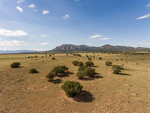 Southern Santa Fe County NM Grazing : Edgewood : Santa Fe County : New Mexico