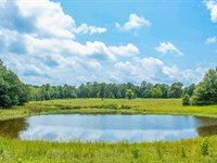 Hunting Land, Hardwoods, Meadow : Pluck : Polk County : Texas