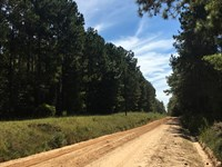Yancey, South Tract : Toomsboro : Wilkinson County : Georgia