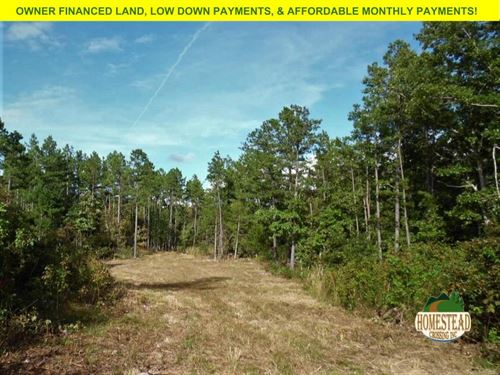 Large Parcel National Forest : Birch Tree : Shannon County : Missouri