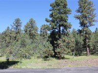 4.97 Acres in Tall Pines in a Gate : Ruidoso : Lincoln County : New Mexico