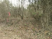 21 Heavily Wooded Hunting Ground : Hestand : Monroe County : Kentucky