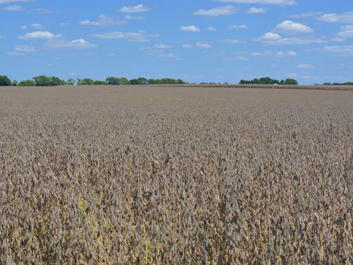 Farmland Auction : Monticello : Piatt County : Illinois