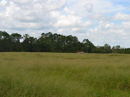 Godwin Road Acreage : Frostproof : Polk County : Florida