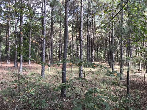 Johnson Tract : Prattville : Autauga County : Alabama