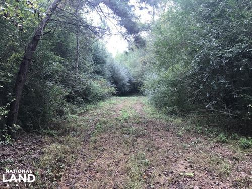 Wooded Hunting Land Near Fayettevil : Roseboro : Sampson County : North Carolina