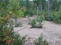 Wooded Land, Warren County Missouri : Warrenton : Warren County : Missouri