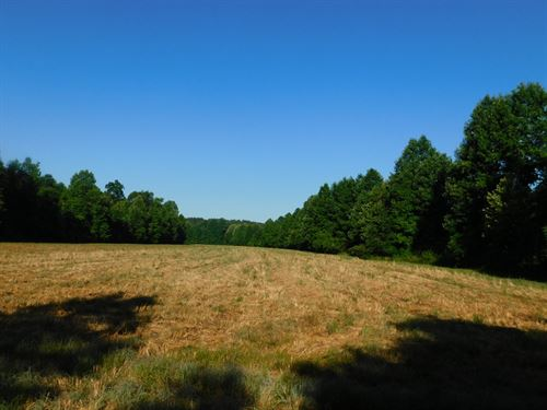 Tn Land, No Restrictions, Timber : Adamsville : McNairy County : Tennessee