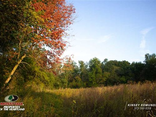 Timber Surrounding Open Acre Plot : New London : Ralls County : Missouri
