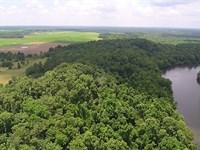 Shell Bluff Plantation On The River : Waynesboro : Burke County : Georgia