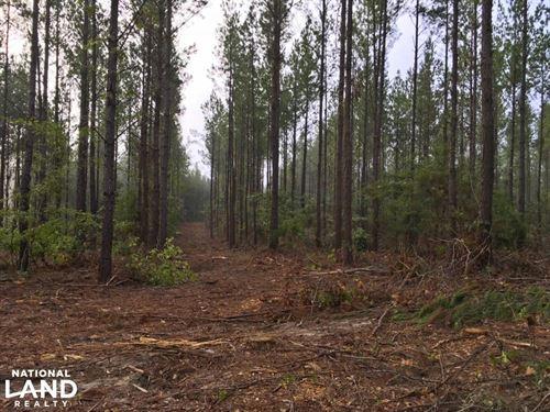 South Prong Taylors Creek Hunting : Chatom : Washington County : Alabama