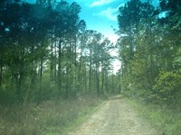 302 Acres Timber/Hunting/Investment : Batson : Hardin County : Texas