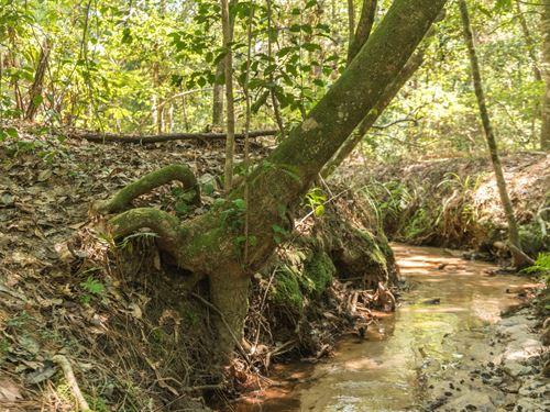 Land Lake Sam Rayburn Spring Fed : Colmesneil : Tyler County : Texas