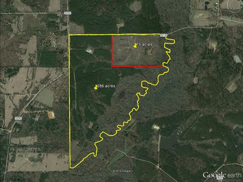 286 Acres Hunting Timberland : Mount Enterprise : Rusk County : Texas