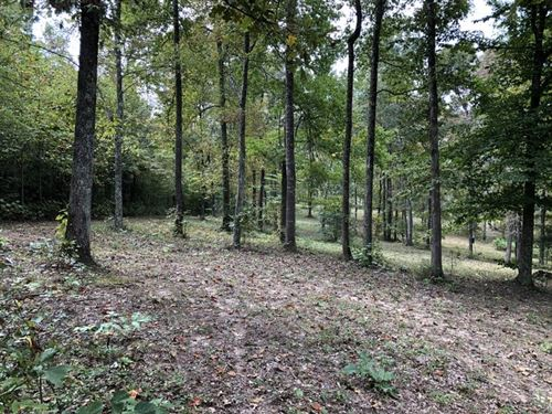 Wooded, Hart County, Ky, Privacy : Munfordville : Hart County : Kentucky