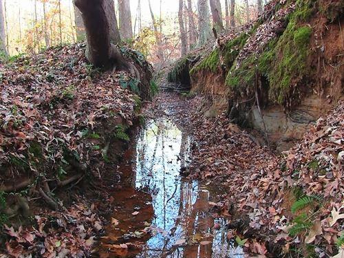 Abundant Wildlife : Sardis : Henderson County : Tennessee