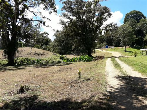 Sustainable Land, Bluff Beach Area : Bocas Del Toro : Panama