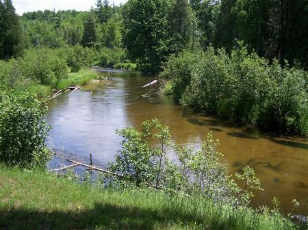 Little manistee river cabin land for sale manistee for Fishing cabins in michigan