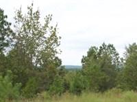 Sc Cabin Tiny Home Hunting Acreage : Cheraw : Chesterfield County : South Carolina