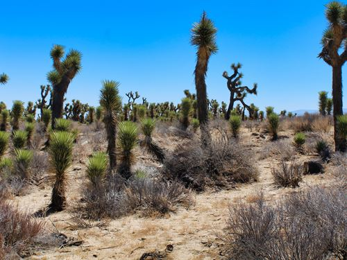 Heisenberg Blue Sky Dreams : Lancaster : Los Angeles County : California