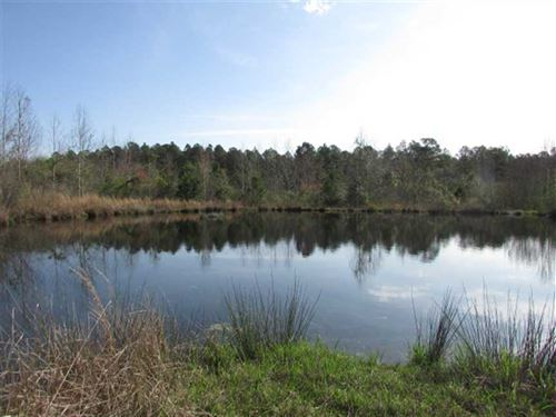 Great Hunting And Investment Tract : Meigs : Colquitt County : Georgia