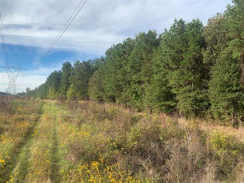 Pine Timberland Hunting Land Union : Strong : Union County : Arkansas