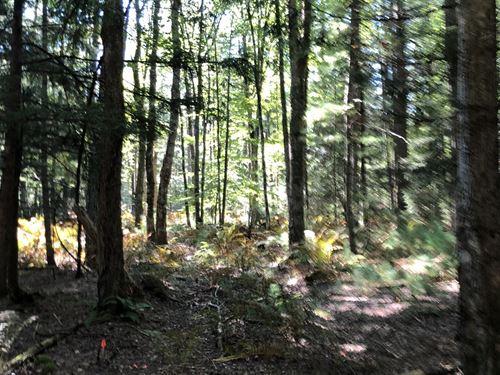 Towering Pines : Vienna : Oneida County : New York