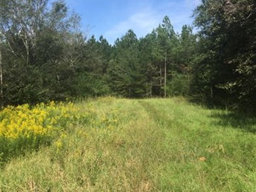 141 Acres In Madison County, Ms : Canton : Madison County : Mississippi