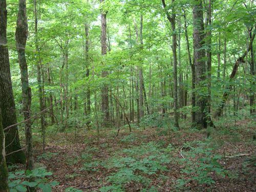 Wooded Acreage On Hwy 35 : Scottboro : Jackson County : Alabama