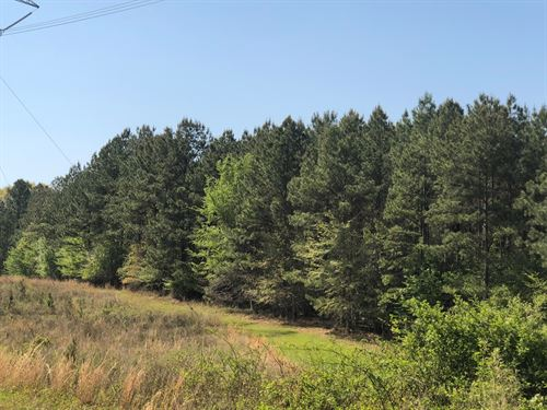 Pine Timber Hunting Land Union : Lisbon : Union County : Arkansas
