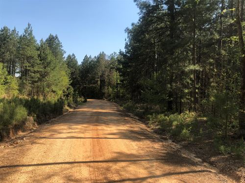 Investment Pine Timberland Southern : Mount Holly : Union County : Arkansas
