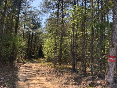 Southern Arkansas Investment Pine : Mount Holly : Union County : Arkansas