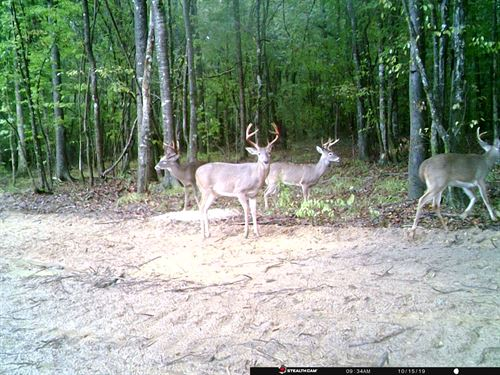 Fine Hunting Tract In Fort Deposit : Fort Deposit : Lowndes County : Alabama