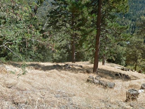 San Bernardino Mountain Lot : Cedarpines Park : San Bernardino County : California