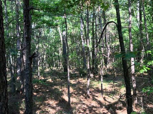 Young Pine/Hardwood Timber Land : Hampton : Calhoun County : Arkansas