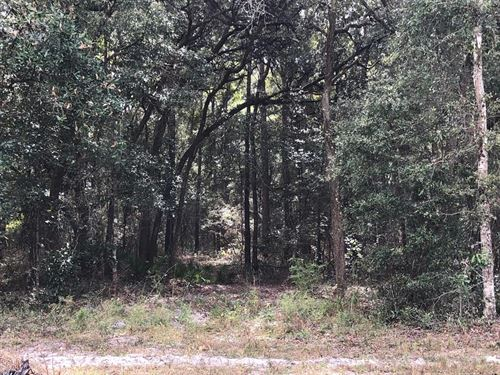Nice Wooded 1.2 Acre Lot 776605 : Trenton : Levy County : Florida