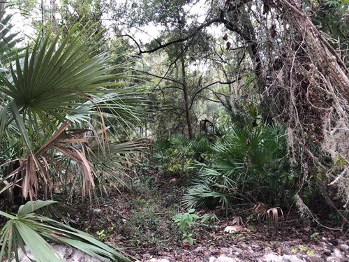 Nice .48 Acre Lot 776600 : Old Town : Dixie County : Florida