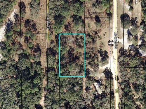 Wooded .54 Acre Lot 776599 : Old Town : Dixie County : Florida